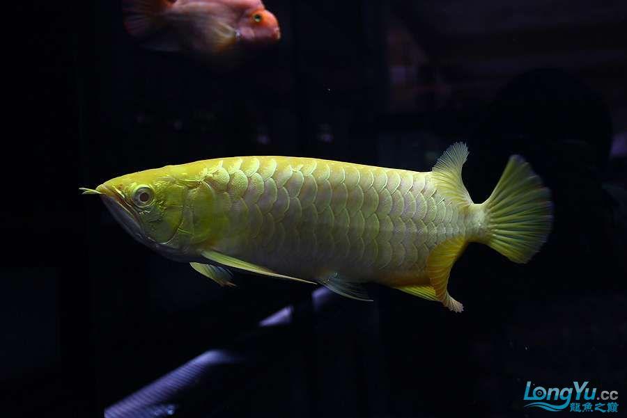 养不着光看看就美 西安观赏鱼信息 西安博特第6张