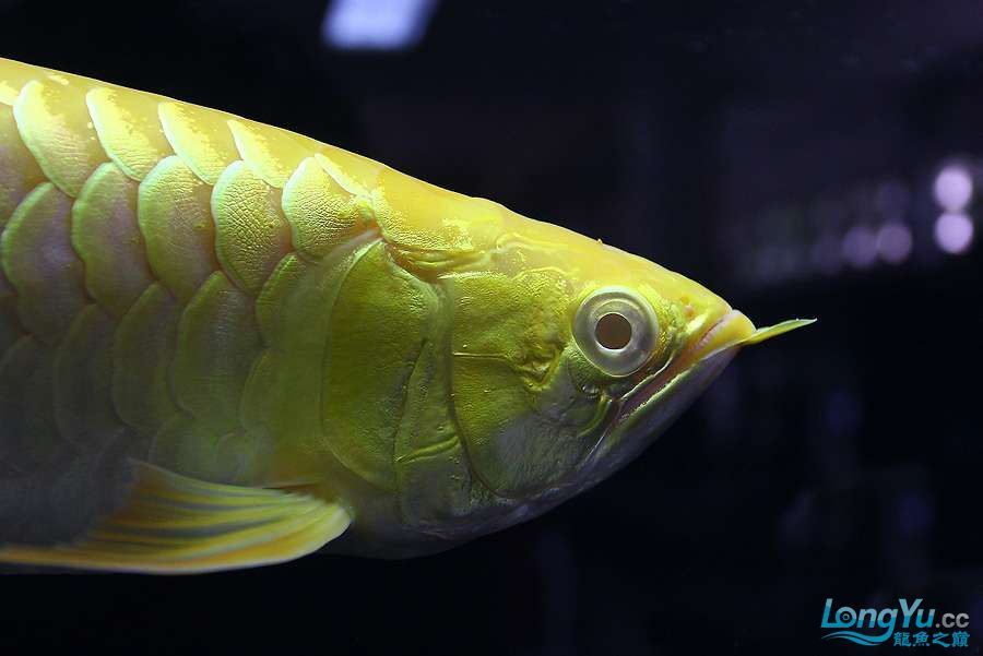 养不着光看看就美 西安观赏鱼信息 西安博特第7张