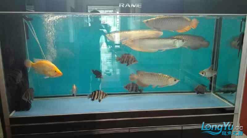 看看我的鱼怎么样? 西安观赏鱼信息 西安博特第1张
