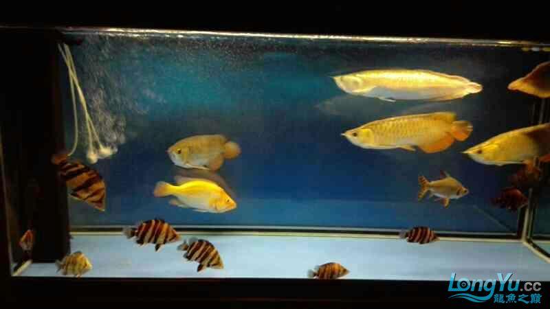 看看我的鱼怎么样? 西安观赏鱼信息 西安博特第3张