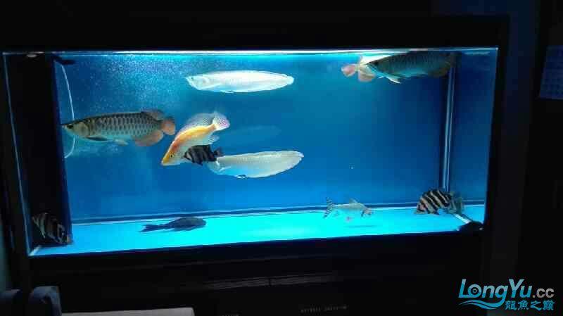 看看我的鱼怎么样? 西安观赏鱼信息 西安博特第4张