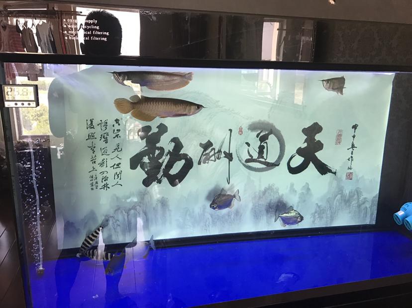 20记录【西安可丽爱水族馆】龙鱼