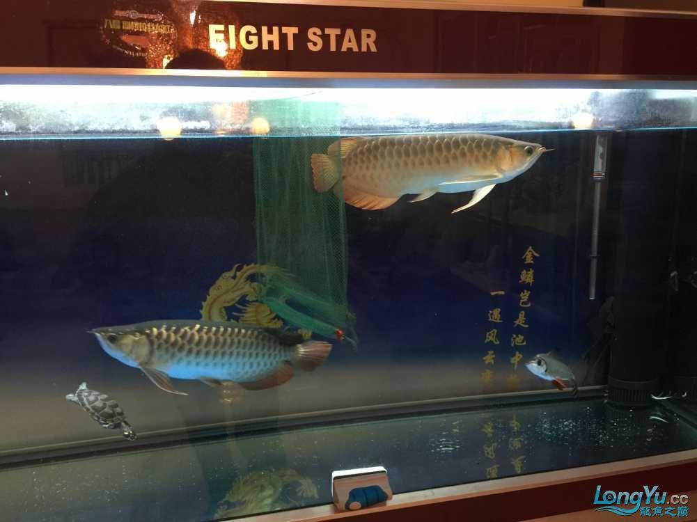 看看鱼 西安龙鱼论坛 西安博特第1张