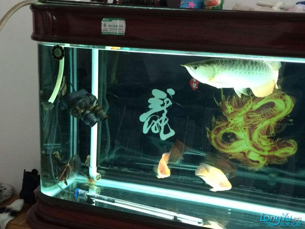 鱼趣养水机养水说一说+我的简单换水 西安观赏鱼信息 西安博特第3张