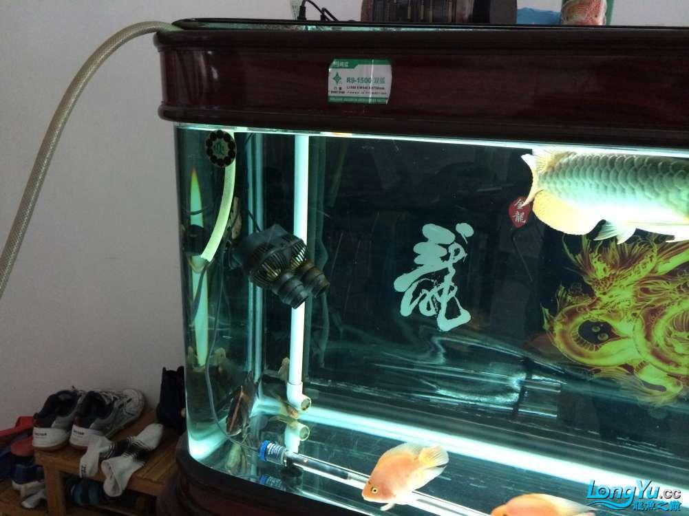 鱼趣养水机养水说一说+我的简单换水 西安观赏鱼信息 西安博特第2张