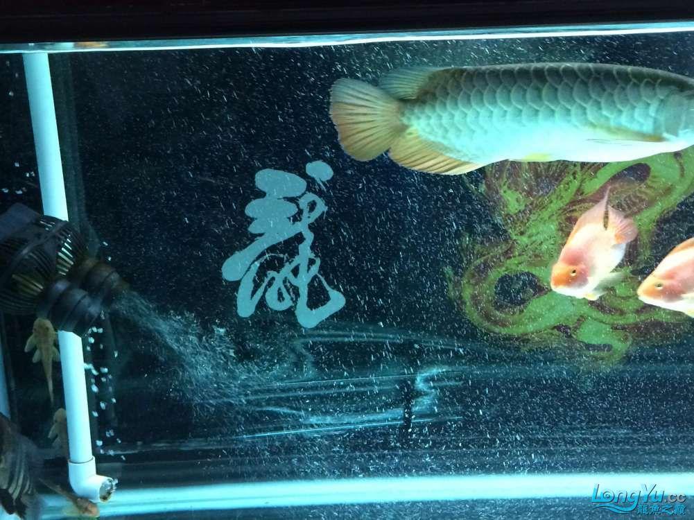 鱼趣养水机养水说一说+我的简单换水 西安观赏鱼信息 西安博特第4张