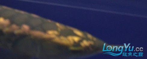 关于国背那点事实话 西安龙鱼论坛 西安博特第5张