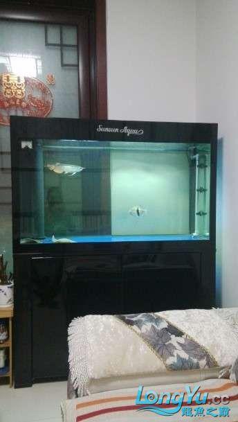 好朋友送的大家觉得我朋友怎么样? 西安观赏鱼信息 西安博特第2张