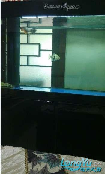 好朋友送的大家觉得我朋友怎么样? 西安观赏鱼信息 西安博特第5张
