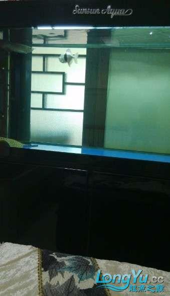 好朋友送的大家觉得我朋友怎么样? 西安观赏鱼信息 西安博特第6张