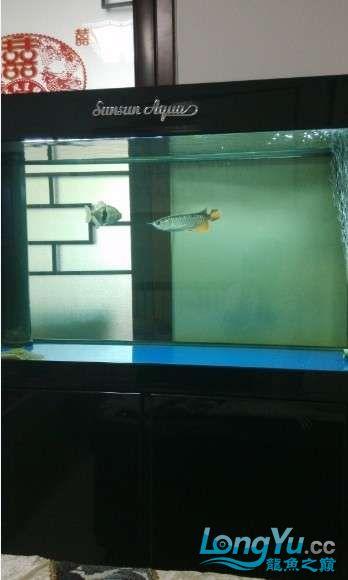 好朋友送的大家觉得我朋友怎么样? 西安观赏鱼信息 西安博特第7张
