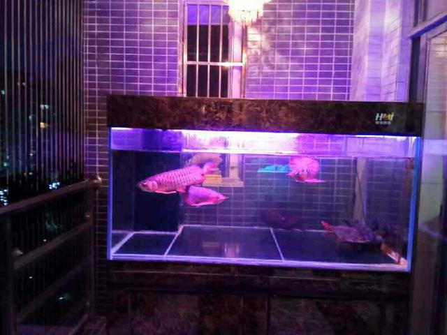 鱼趣NEC助力+平常鱼养出平常心 西安观赏鱼信息 西安博特第1张