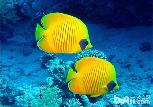 鱼趣NEC助力+平常鱼养出平常心 西安观赏鱼信息 西安博特第4张