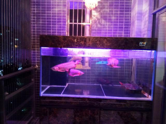 鱼趣NEC助力+平常鱼养出平常心 西安观赏鱼信息 西安博特第2张