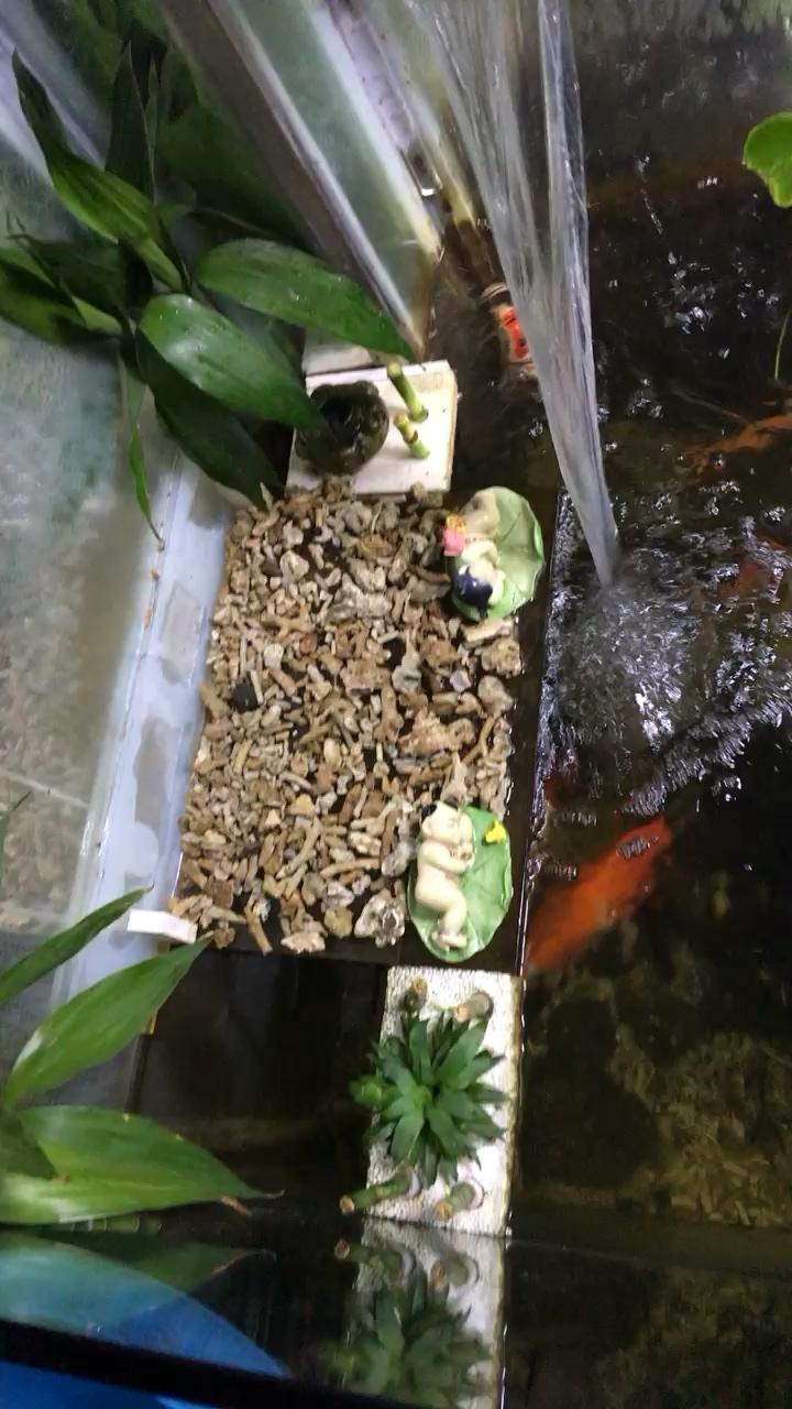 洗完过滤绵拍一组 西安龙鱼论坛 西安博特第1张