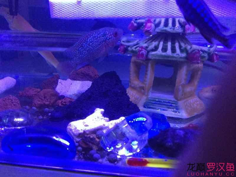 双花 西安观赏鱼信息 西安博特第3张