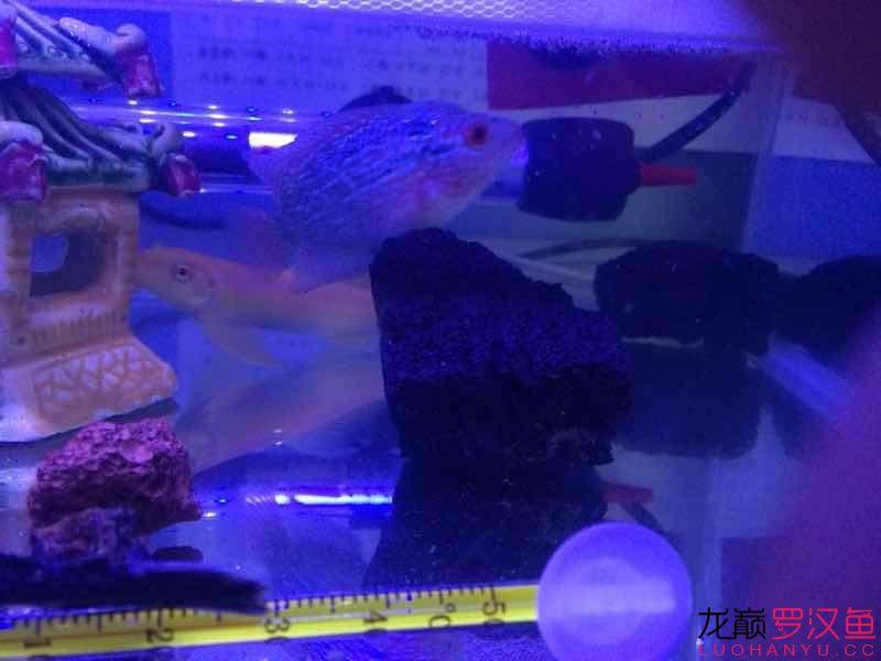双花 西安观赏鱼信息 西安博特第4张
