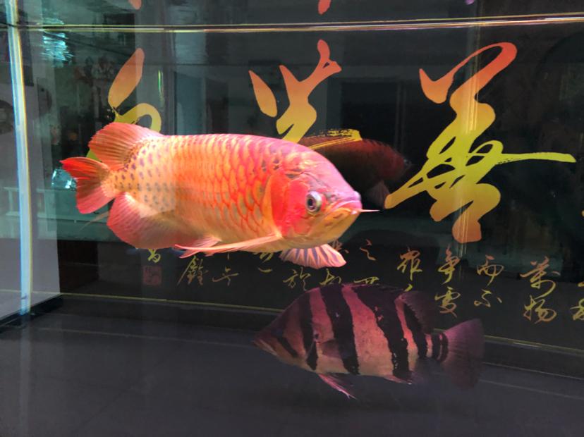 星期天分享一下 西安观赏鱼信息 西安博特第1张