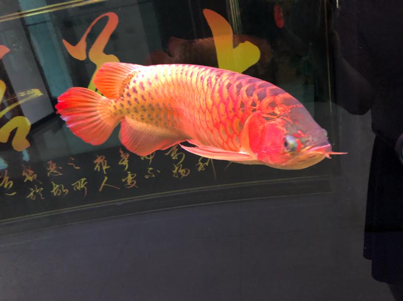 星期天分享一下 西安观赏鱼信息 西安博特第3张
