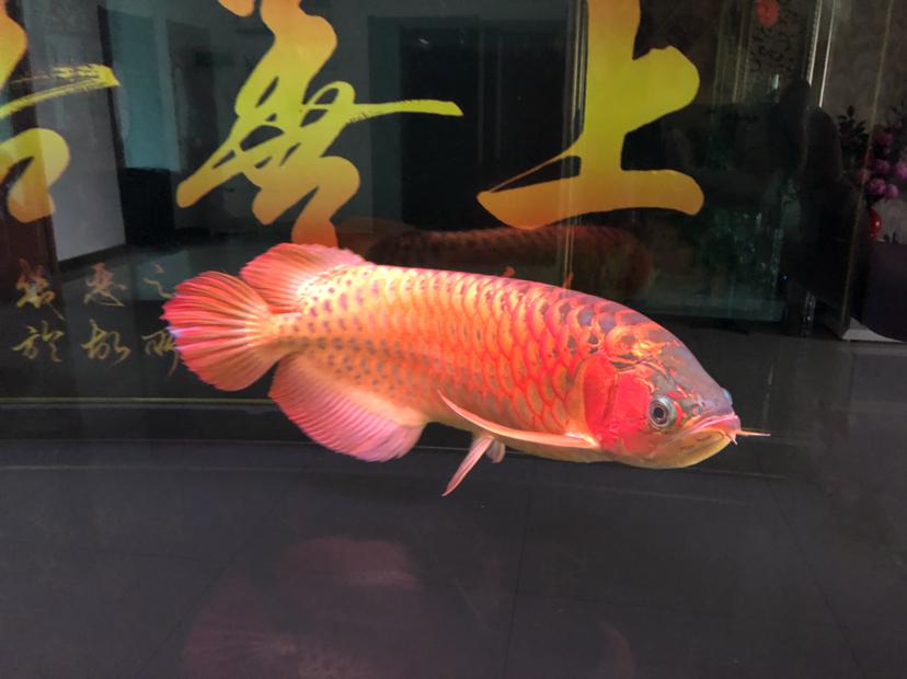 星期天分享一下 西安观赏鱼信息 西安博特第4张