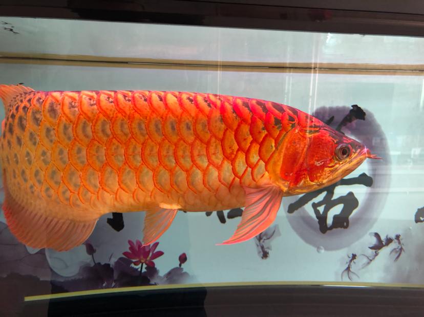 星期天分享一下 西安观赏鱼信息 西安博特第5张