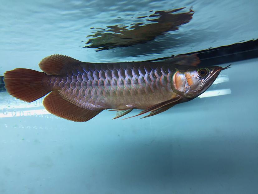 不知不觉已经半年 西安观赏鱼信息 西安博特第2张