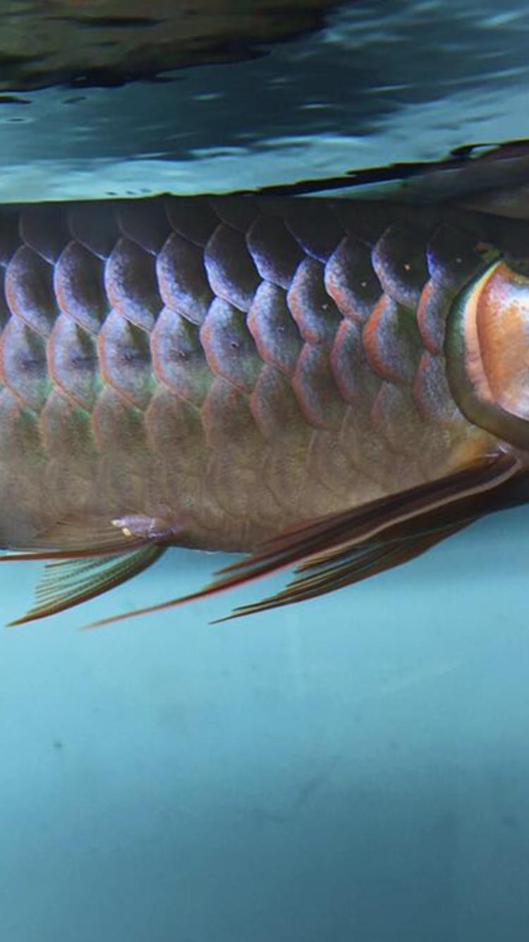 不知不觉已经半年 西安观赏鱼信息 西安博特第3张