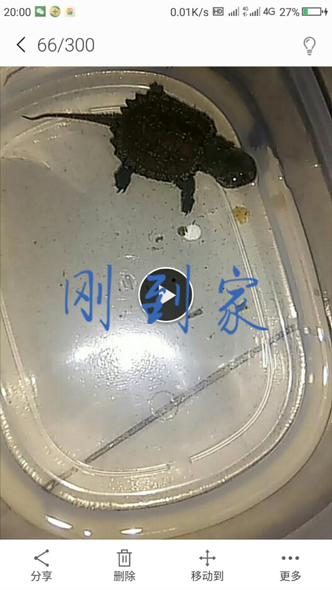 【西安魟鱼】长得有一点点快 西安观赏鱼信息 西安博特第1张