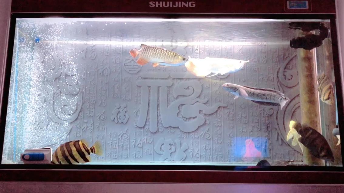 中国原生鱼山斑混养记 西安观赏鱼信息 西安博特第1张