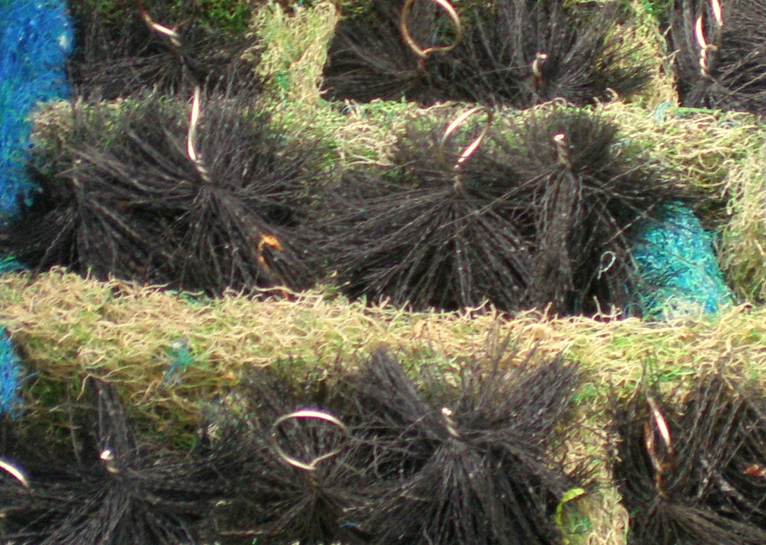 中国原生鱼山斑混养记 西安观赏鱼信息 西安博特第2张