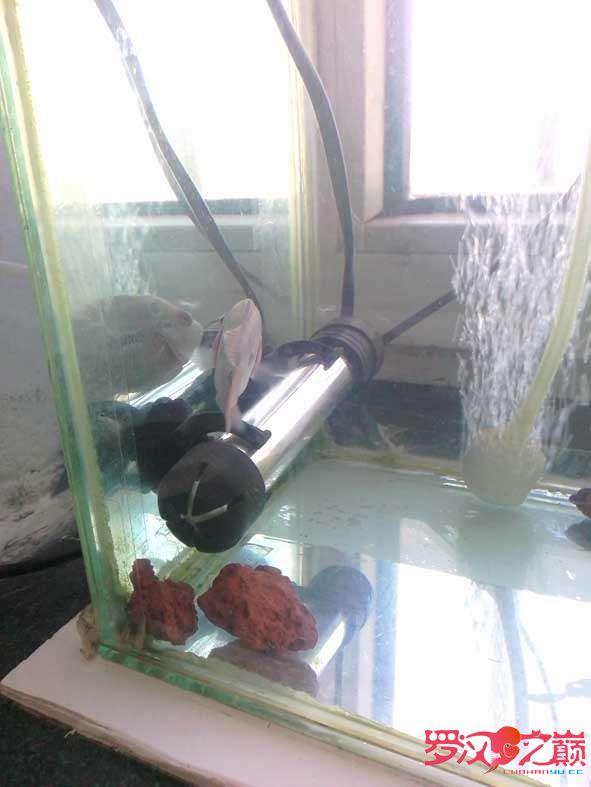说说加热棒 加热器短小精湛防水放电防雷劈欧耶 西安龙鱼论坛 西安博特第7张