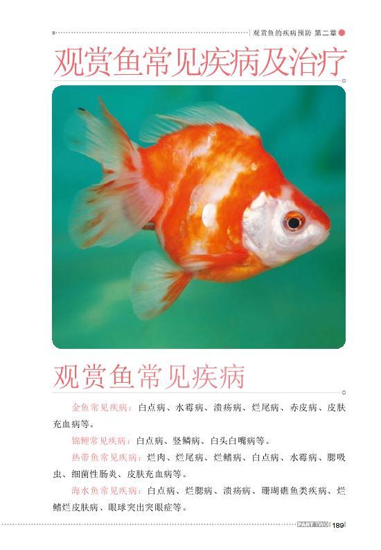 关于鱼缸龙鱼 西安观赏鱼信息