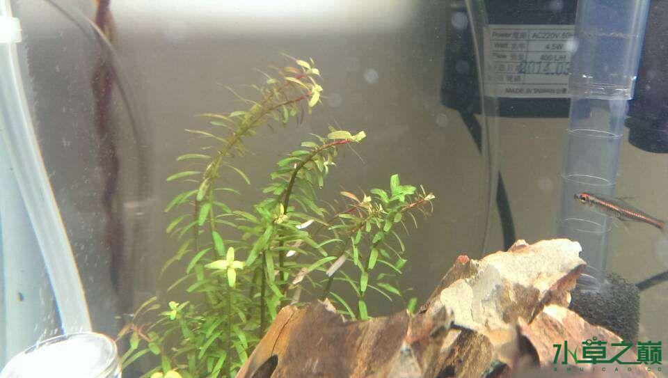 求大师帮我看看我的水草怎么了? 西安观赏鱼信息 西安博特第1张