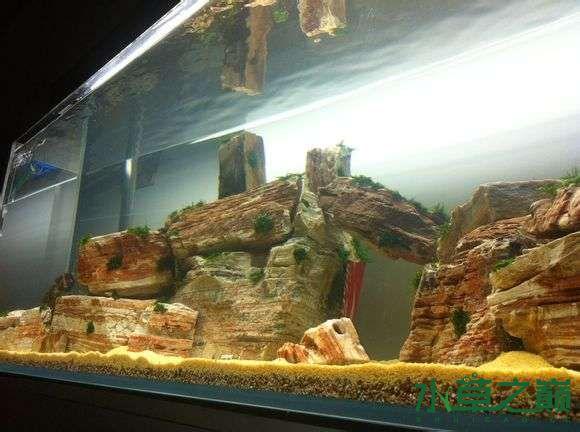 从新开了个缸大家帮起个名字 西安观赏鱼信息 西安博特第6张
