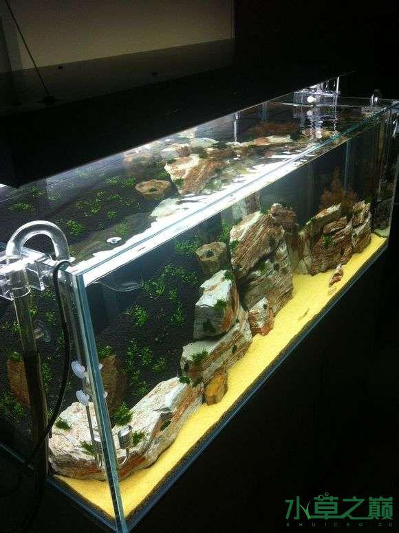 从新开了个缸大家帮起个名字 西安观赏鱼信息 西安博特第8张