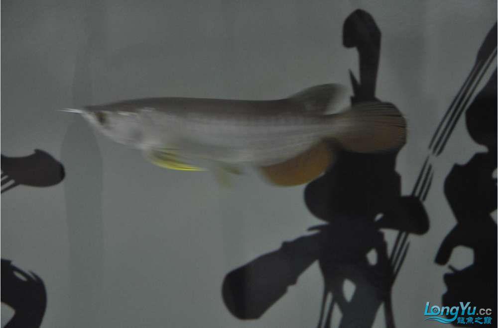 大家看看这个价格值么?有没有上了JS的当 西安观赏鱼信息 西安博特第2张