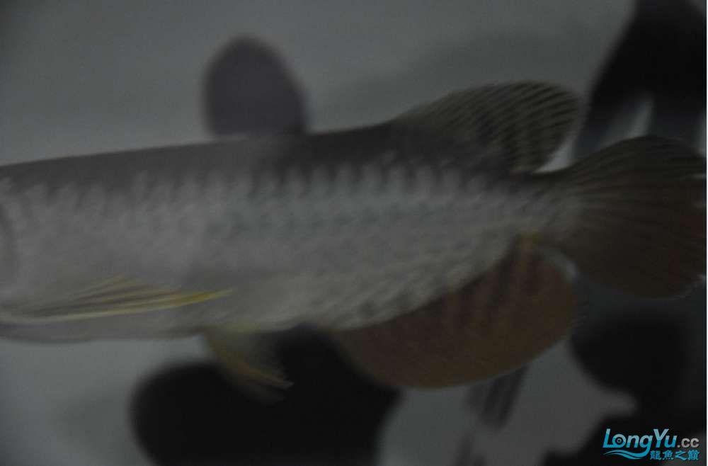 大家看看这个价格值么?有没有上了JS的当 西安观赏鱼信息 西安博特第4张