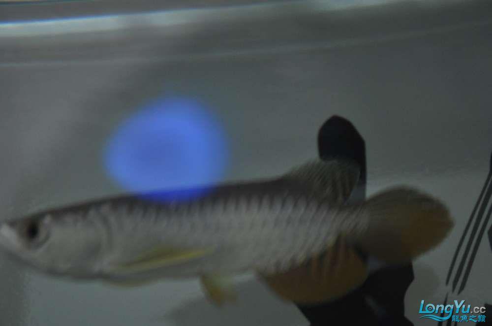 大家看看这个价格值么?有没有上了JS的当 西安观赏鱼信息 西安博特第5张