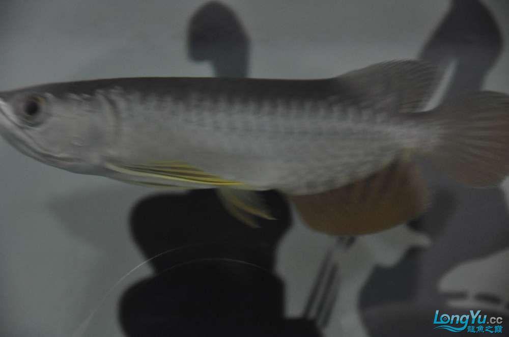 大家看看这个价格值么?有没有上了JS的当 西安观赏鱼信息 西安博特第7张