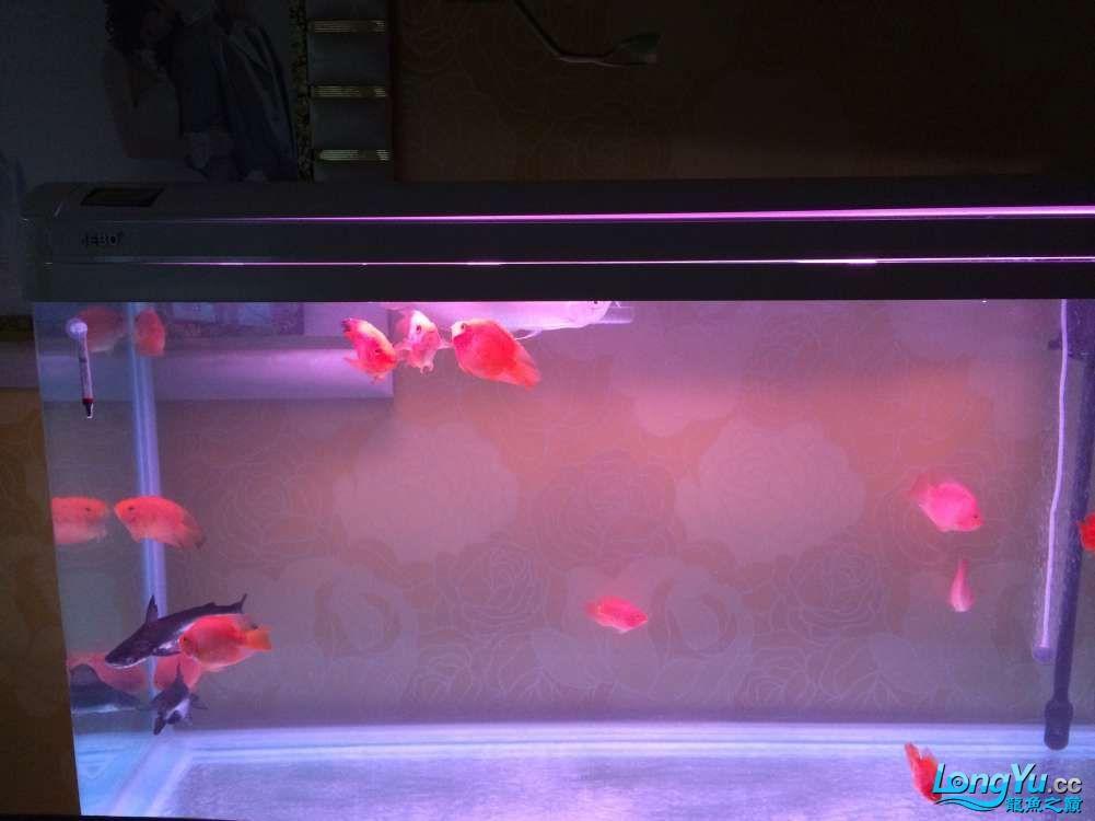 抓鱼高手请进 西安观赏鱼信息 西安博特第2张