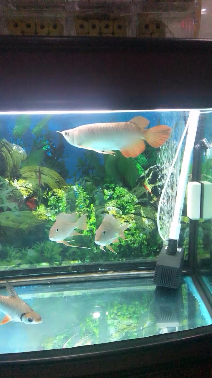 难得的一派祥和 西安观赏鱼信息