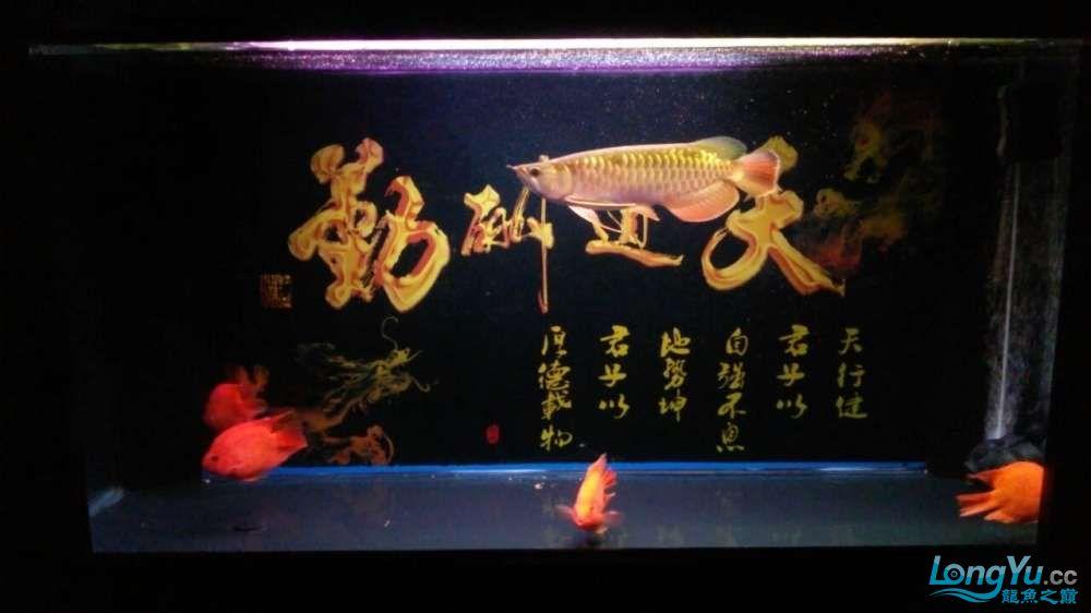 此龙如何?? 西安观赏鱼信息 西安博特第3张