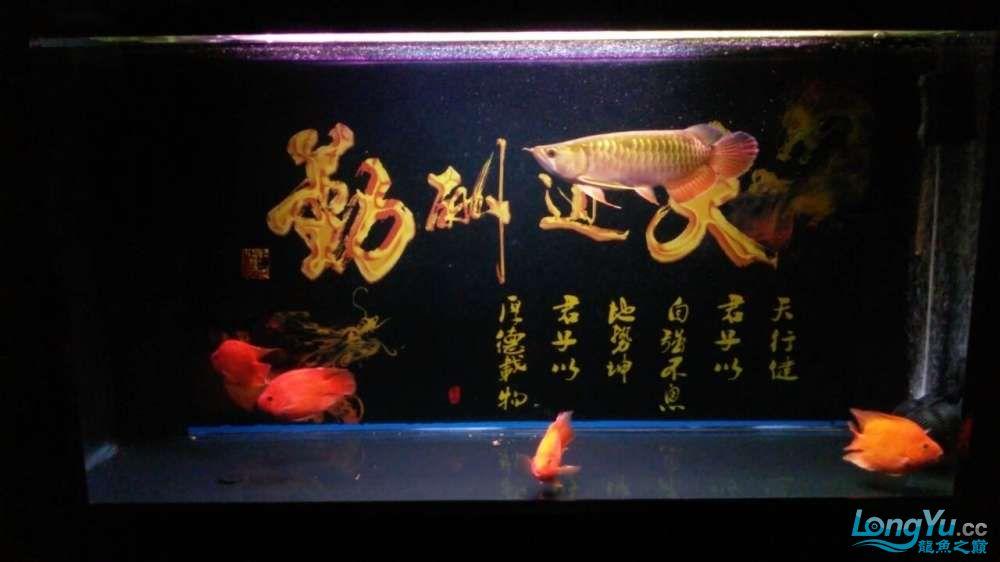 此龙如何?? 西安观赏鱼信息 西安博特第2张