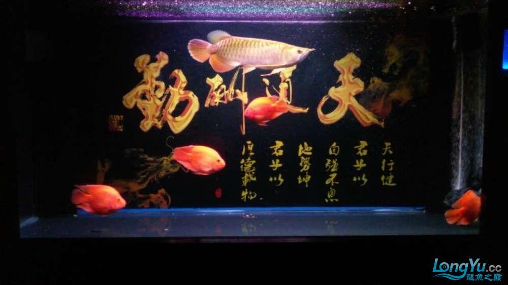 此龙如何?? 西安观赏鱼信息 西安博特第5张
