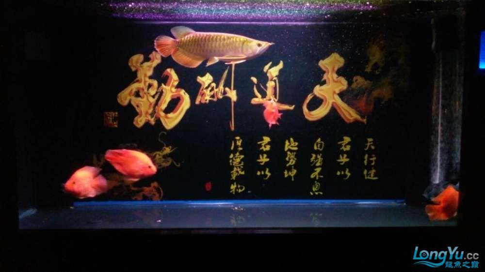 此龙如何?? 西安观赏鱼信息 西安博特第4张