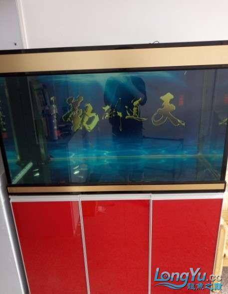 搞了个12670的龙缸够牢固的 西安观赏鱼信息 西安博特第13张