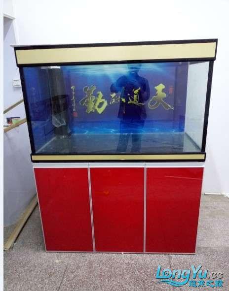 搞了个12670的龙缸够牢固的 西安观赏鱼信息 西安博特第14张