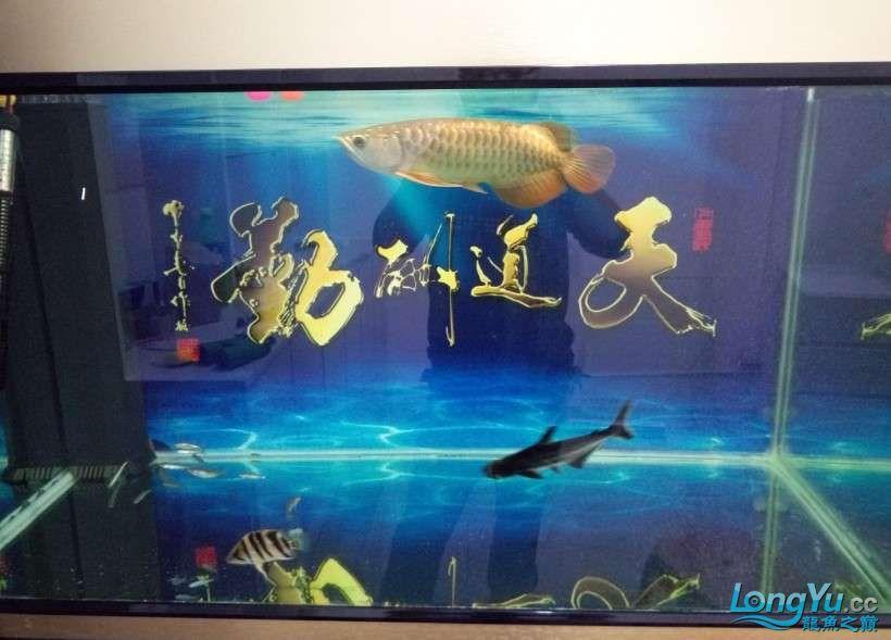 搞了个12670的龙缸够牢固的 西安观赏鱼信息 西安博特第15张