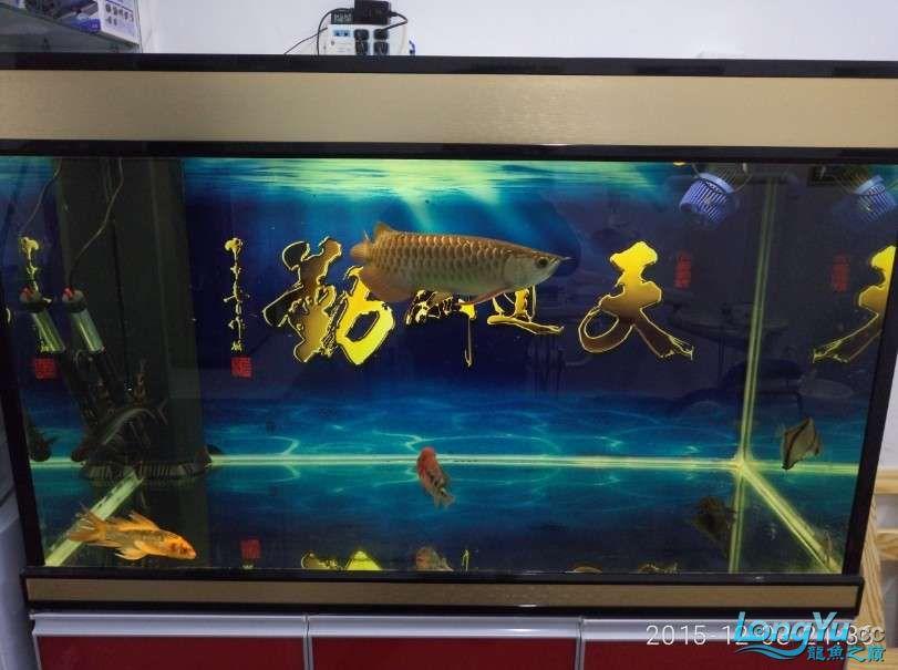 搞了个12670的龙缸够牢固的 西安观赏鱼信息 西安博特第20张
