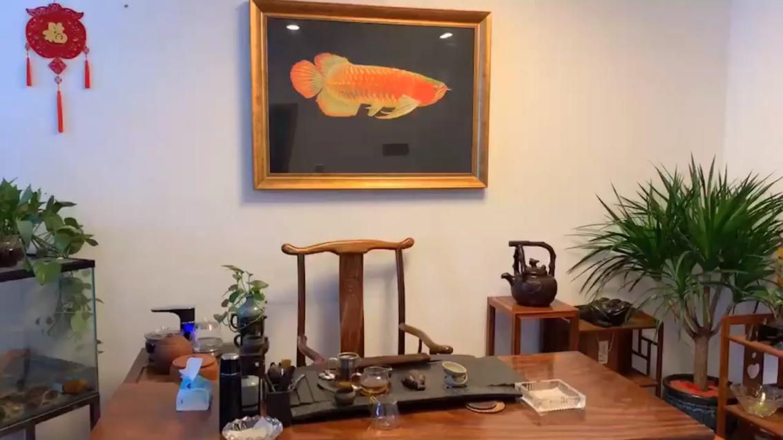 记录你的美龙鱼龙巅 西安龙鱼论坛 西安博特第1张